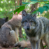 The Minnesota Zoo hosts three new wolf pups