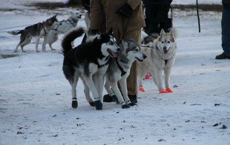 Loppet Festival sponsors winter activities in Twin Cities