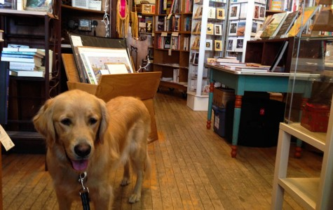 Pup-friendly Twin Cities