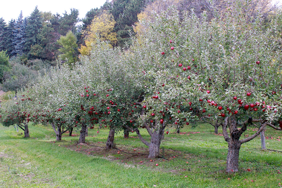 Fall marks the opening of many seasonal destinations, such as the Victoria Valley Orchard.