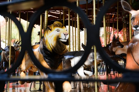 Caged in: Animals on display