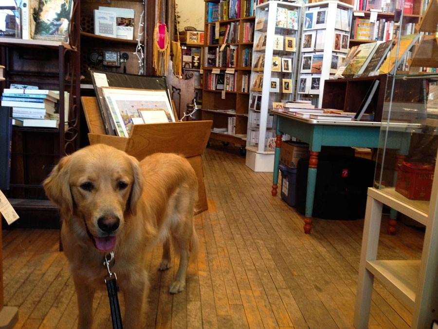One-year-old Golden Retriever Riley Elizabeth Desmond gives this bookstore two paws up.