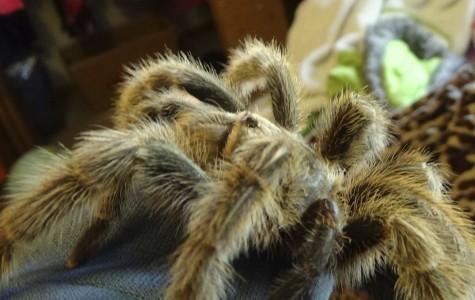 Tarantula–Emily