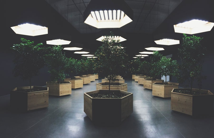 A walk through this room full of different species of trees in octagonal containers marks the end of the Hippie Modernism Exhibit at the Walker.