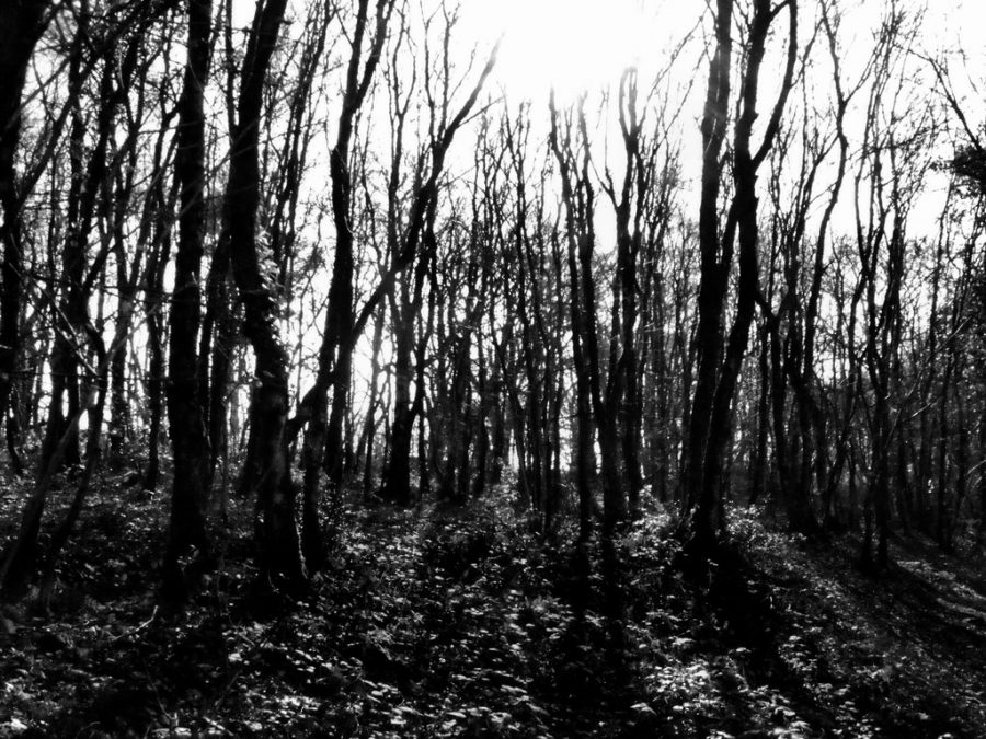 Blair Witch tells the story of James and his friends as they search for his missing sister.
