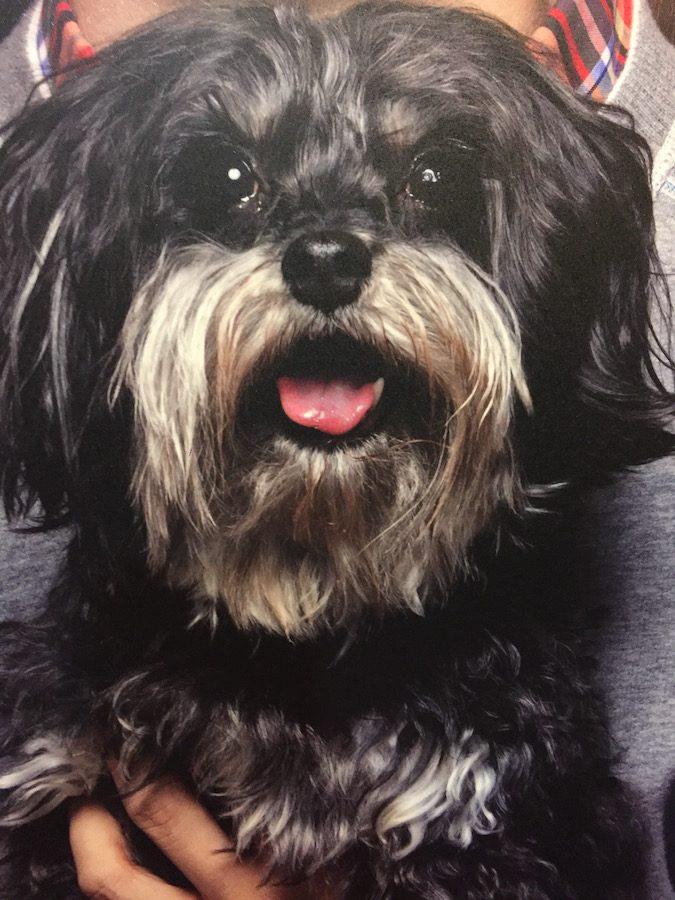 Meet+the+Finals+Dogs%3A+Lyla
