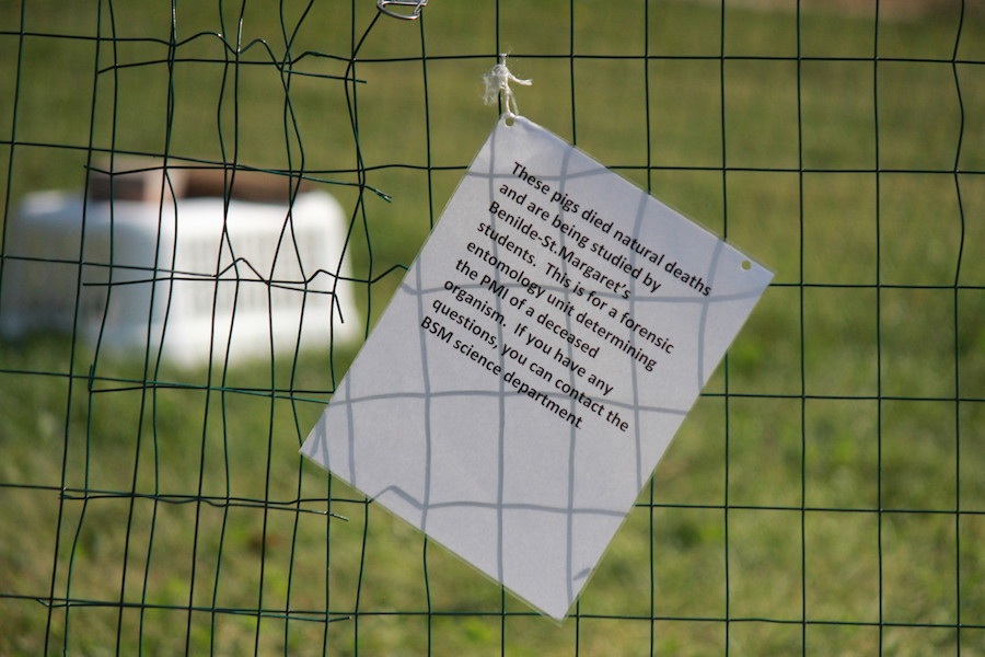 A+sign+was+posted+to+help+any+confusion+or+fear+surrounding+the+pigs.