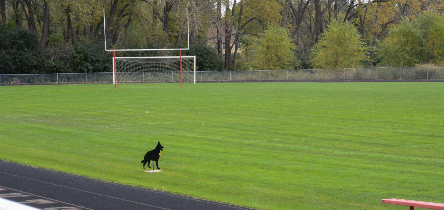 Dogs are placed on the field to distract and scare off geese.