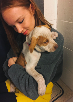 Senior Katherine McCracken volunteers at the Animal Humane Society