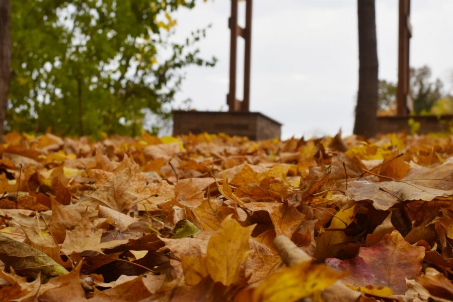 Leaves+begin+to+fall+during+the+month+of+October