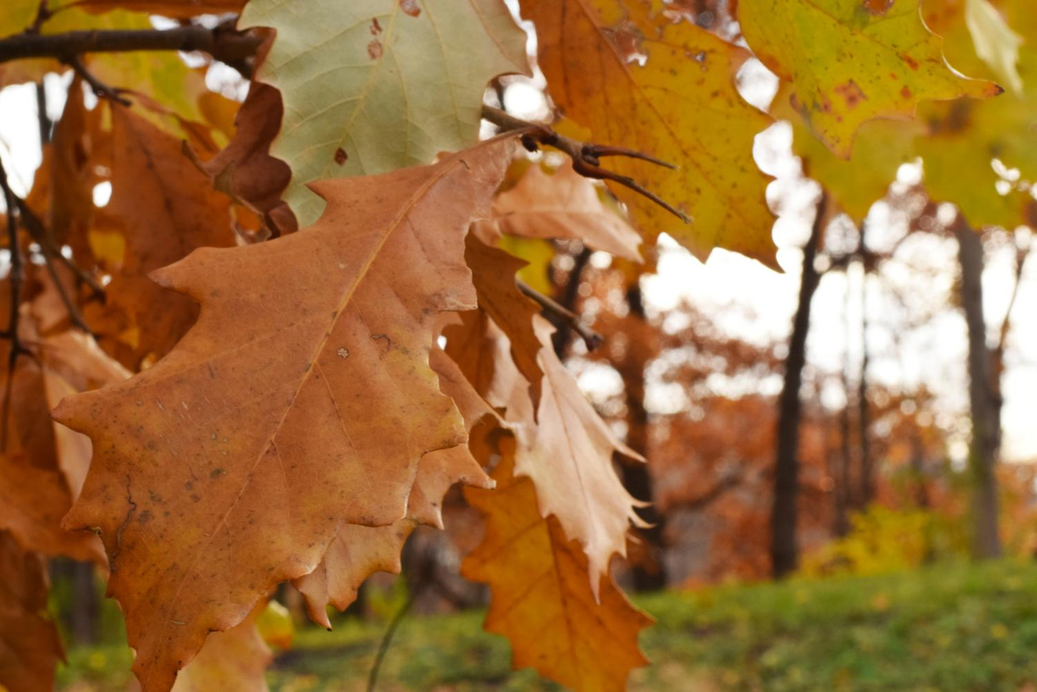 Colorful September leaves bring the sense of the beginning of fall