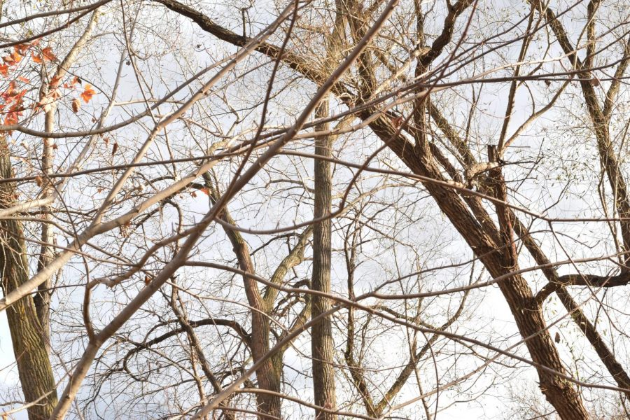 The+bare+trees+portray+the+ending+of+fall+drawing+closer