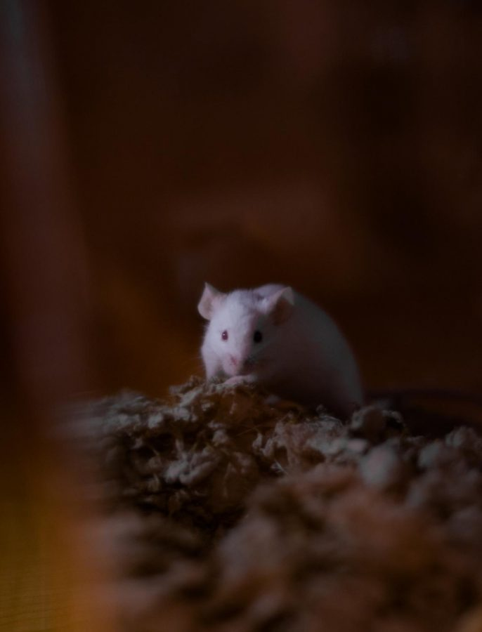 The mice are all named after cheese or mouse related things.