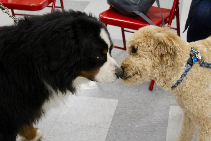 One key part of dog fest is the chance for dogs to make friends.