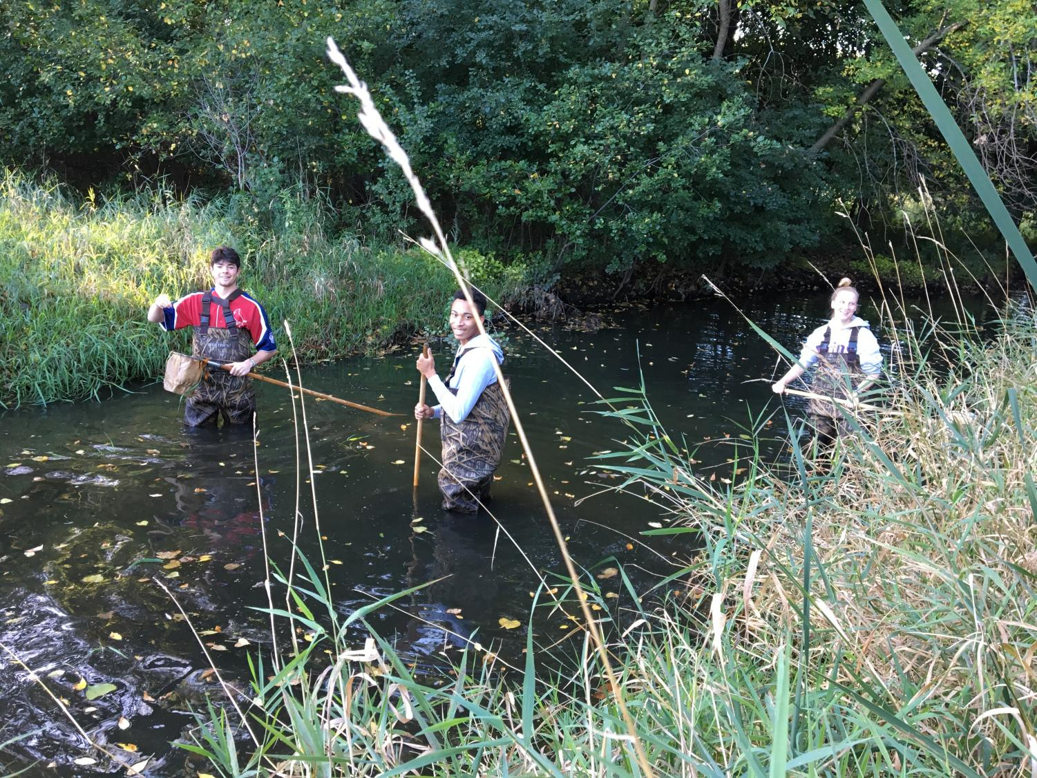 Ecology students put waiters on and jumped into Minnehaha Creek to collect macroinvertebrate samples.