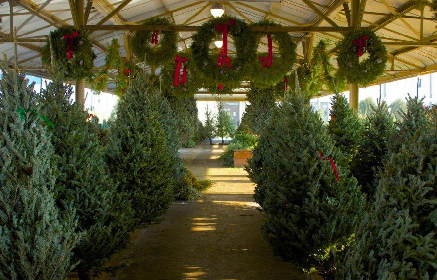 Christmas tree shortage explained [Podcast]