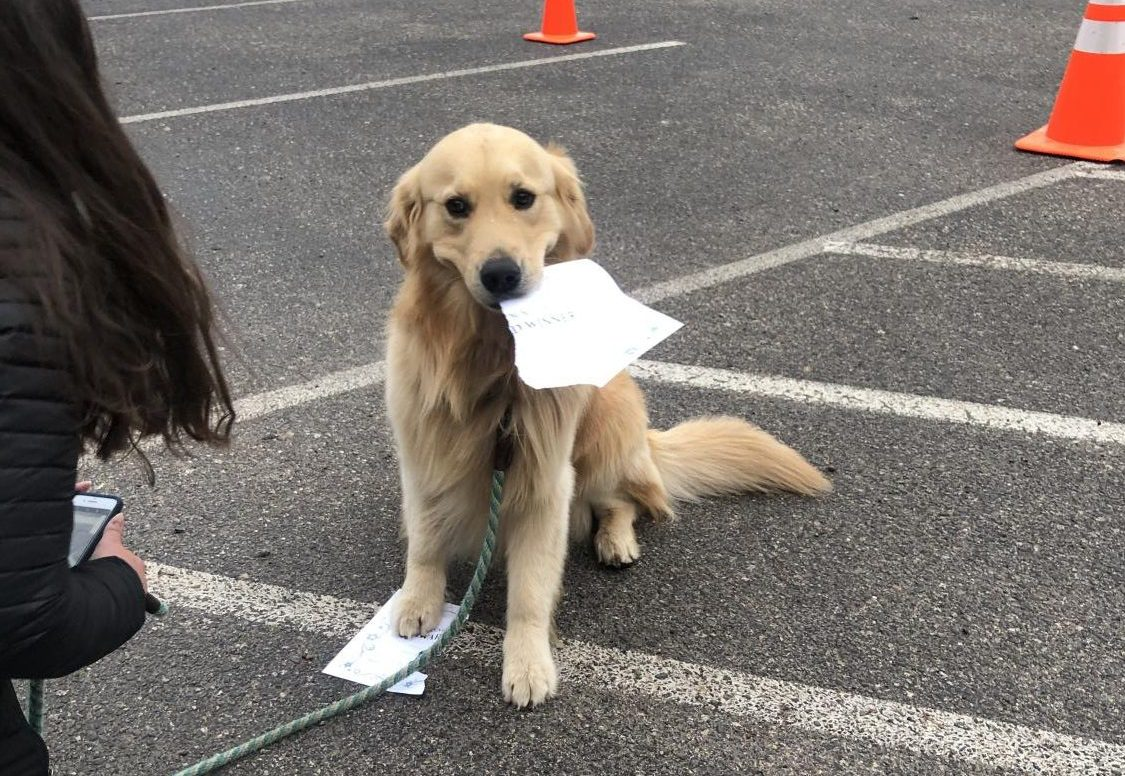 One of the K-9 contestants happily poses with their award of